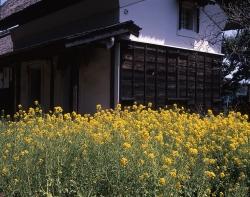 yokohama_tsurumi_04