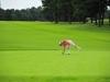 43_golf_04_0566