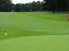 43_golf_04_1295