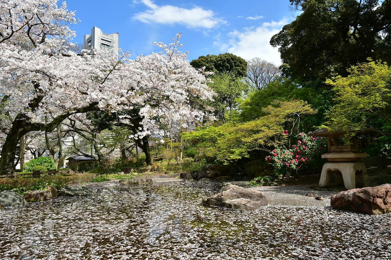 (2017/04/13〜)「桜満開」
