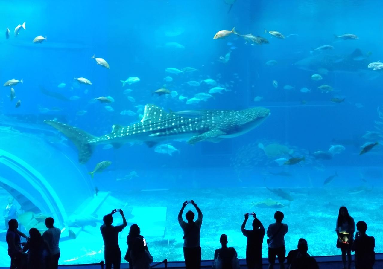 (2018/04/18〜)「美ら海水族館の大水槽」