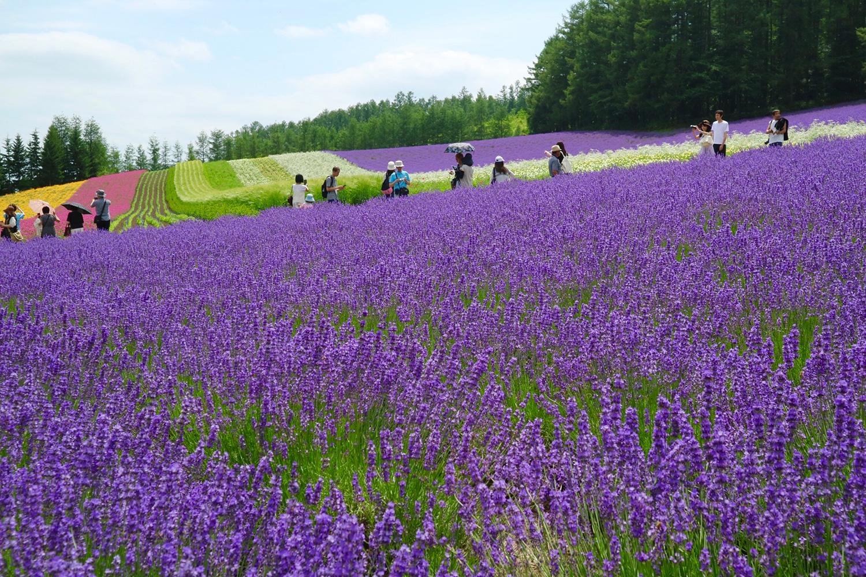 (2018/07/24〜)「ラベンダーの花咲く季節」