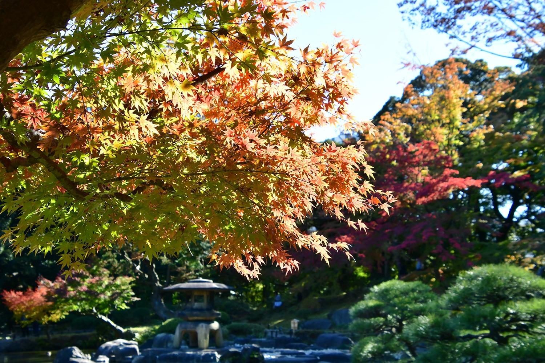 (2018/11/29〜)「秋の旧古河庭園」