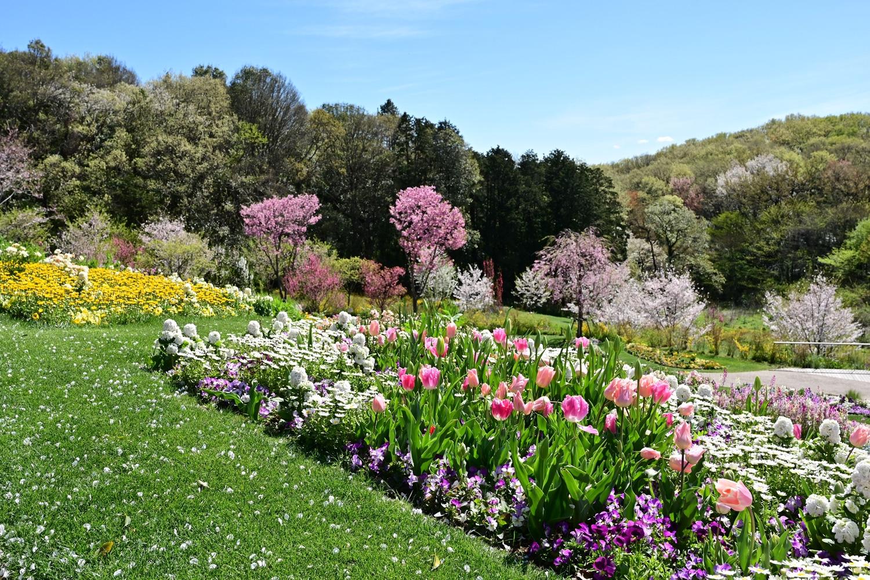 (2019/04/18)「春の里山ガーデン」
