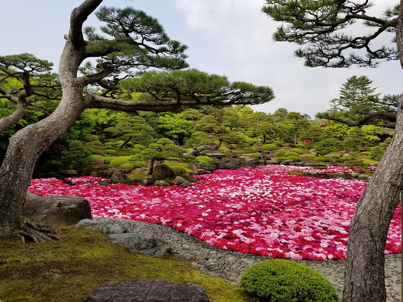 (2019/05/04~)「大根島 由志園へぜひ!」
