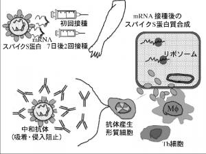 prof_okuda_05